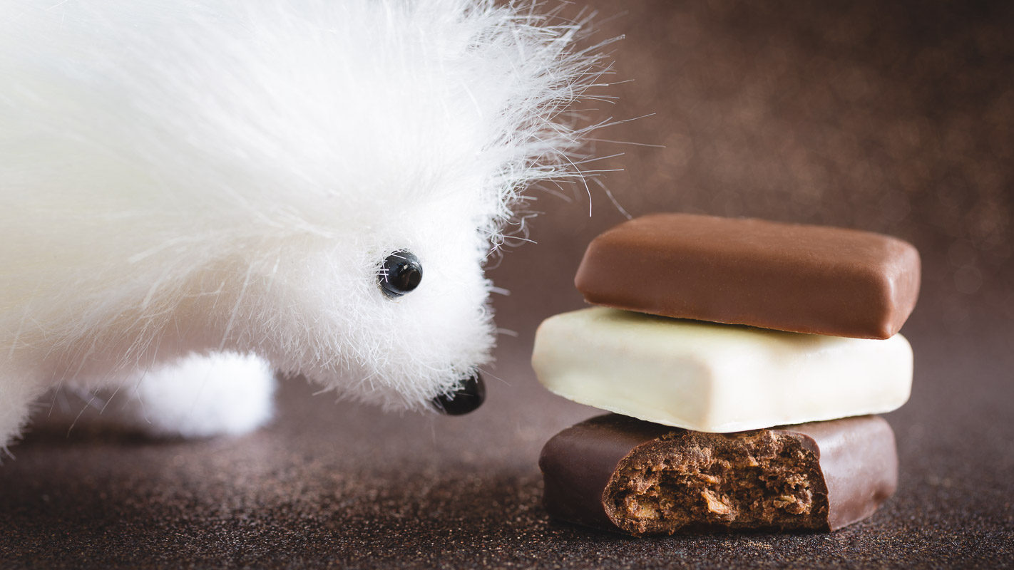 chocolat croustillant avec ours
